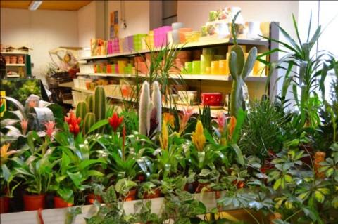 bestehorns markt gartencenter zimmerpflanzen. Black Bedroom Furniture Sets. Home Design Ideas